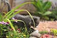 Little Kitten in Garden