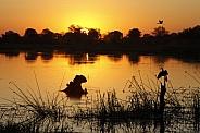 Sunset - Okavango Delta - Botswana