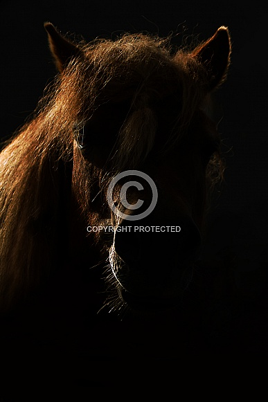 Backlit Shetland Pony