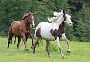 2 Horses Running