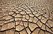 Environmental Disaster - Drought
