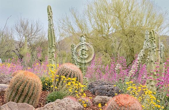 Arizona Desert in the Spring