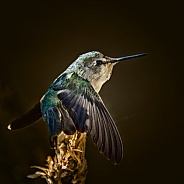 Hummingbird Stretch