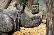 Baby Indian Rhino
