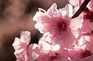 Spring blossom.