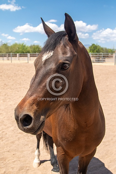 Close up head shot of a horse in a ring