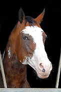 Painted indian horse