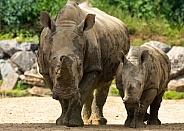 Rhino Mum and Baby