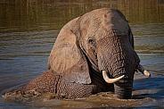 Elephant Spa Bath