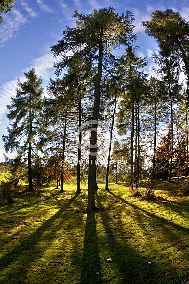 Woodland trees and sunlight - England