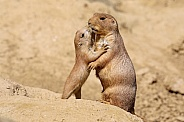Black-tailed prairie dog mother with child