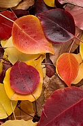 Autumn leaves cluster