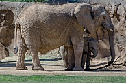 Elephant with Calf