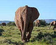 Say Hello. African Elephant