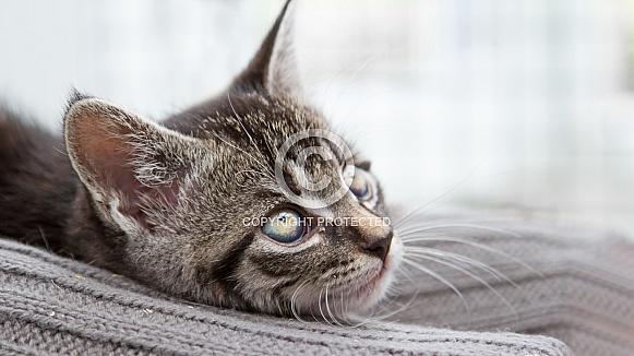 Tabby Kitten on Blanket