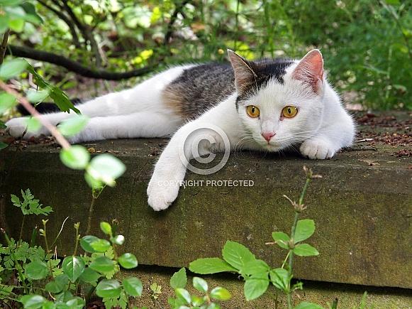 Cat on a graveyard