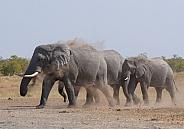 African Elephant Kruger National Park SA