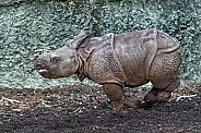 Babt Rhino Running