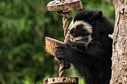 Andean Bear Cub Side Profile On Tree