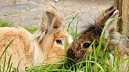 Rabbits In Garden