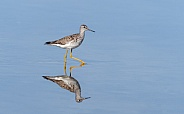 Lesser yellowlegs with a Reflection