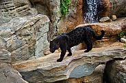 Jaguar Crossing