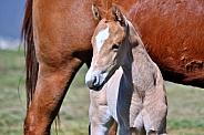 Paint Foal Portrait