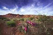 Desert Spring Cactus