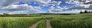 Agricultural land - United Kingdom