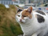 Calico cat 1