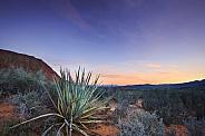Desert Yucca Landscape