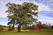 Oak tree and Autumn colors - England