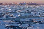 Sea ice off the coast of Greenland