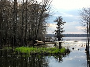 Lake with Cypress Trees