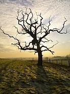 Winter - North Yorkshire - England