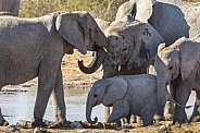 Family of African Elephants - Namibia