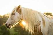 Paint Pony
