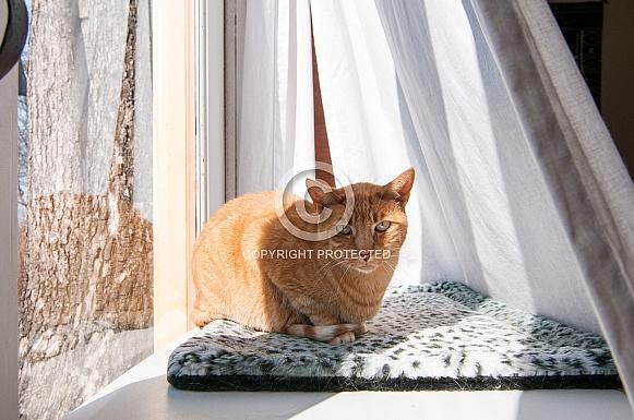 An orange tabby cat in a window