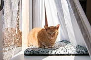 An orange tabby cat in a window