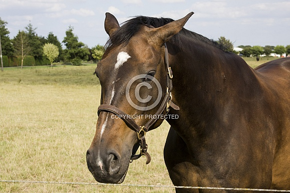 Horse in the sun wearing bridle