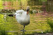 Mute Swan - Kung Foo