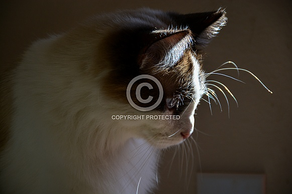 Cat. Glowing Whiskers