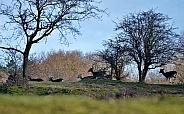 Deer in Landscape