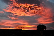 Winter Sunrise In The Karoo