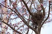 Spring time nest.