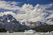 Laro Grey - Patagonia - Chile
