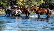 Gila River Wild Horses