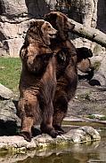 Kamtschatka Bears