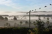 Early Morning Mist - UK