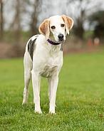 Light Trailhound